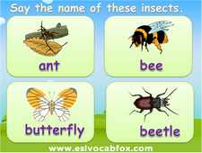 Names of Insects PPT, English Langauge PowerPoint, flea, bee, beetle, grasshopper, butterfly, ants, etc.