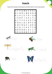 Insects Vocabulary 1