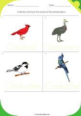 Birds Sheet 1