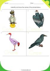 Birds Sheet 2