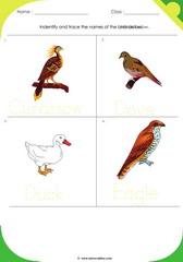Birds Sheet 3