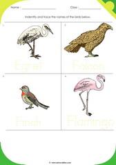 Birds Sheet 4