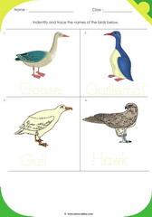 Birds Sheet 5