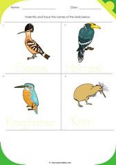 Birds Sheet 6