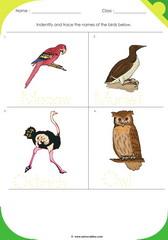 Birds Sheet 7