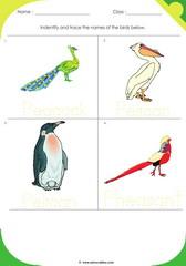 Birds Sheet 8