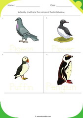 Birds Sheet 9