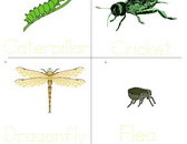 insect-vocabulary-sheet-2