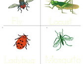 insect-vocabulary-sheet-3