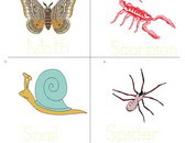 insect-vocabulary-sheet-4