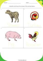 Farm Animals 3