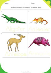 Land Animals 1