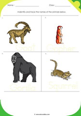 Land Animals 2