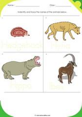 Land Animals 3