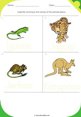 Land Animals 4