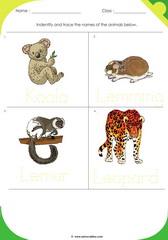 Land Animals 5