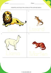 Land Animals 6