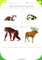 Land Animals 7