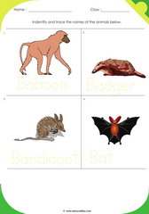 Land Animals 8
