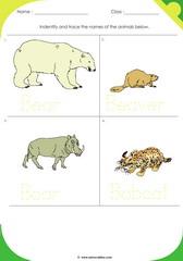 Land Animals 9