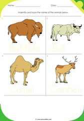 Land Animals 10