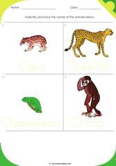 Land Animals 11