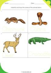 Land Animals 12