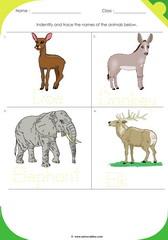 Land Animals 13