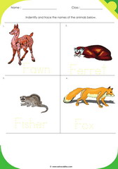 Land Animals 14