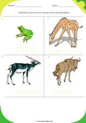 Land Animals 15